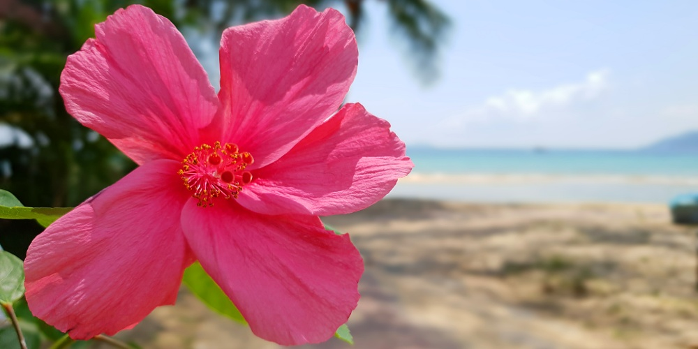 Beautiful Tioman flora